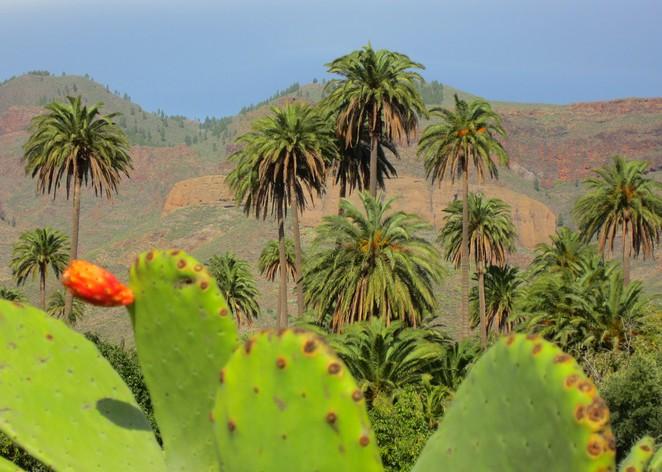gran-canaria-natuur-binnenland