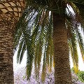 palmbomen-valencia