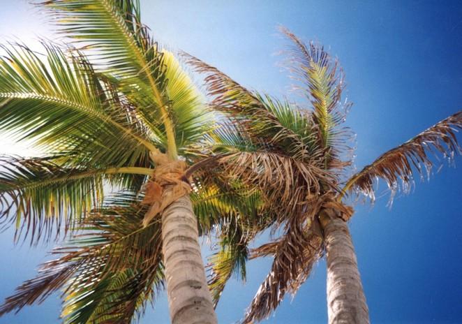 palmbomen-foto-followmyfootprints