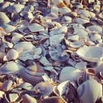 Tip ga lekker naar het strand vandaag! De zon schijnthellip