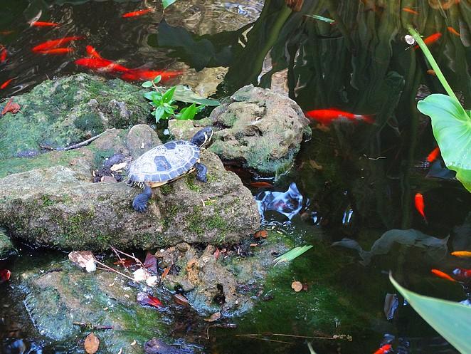 toscane-schildpadden