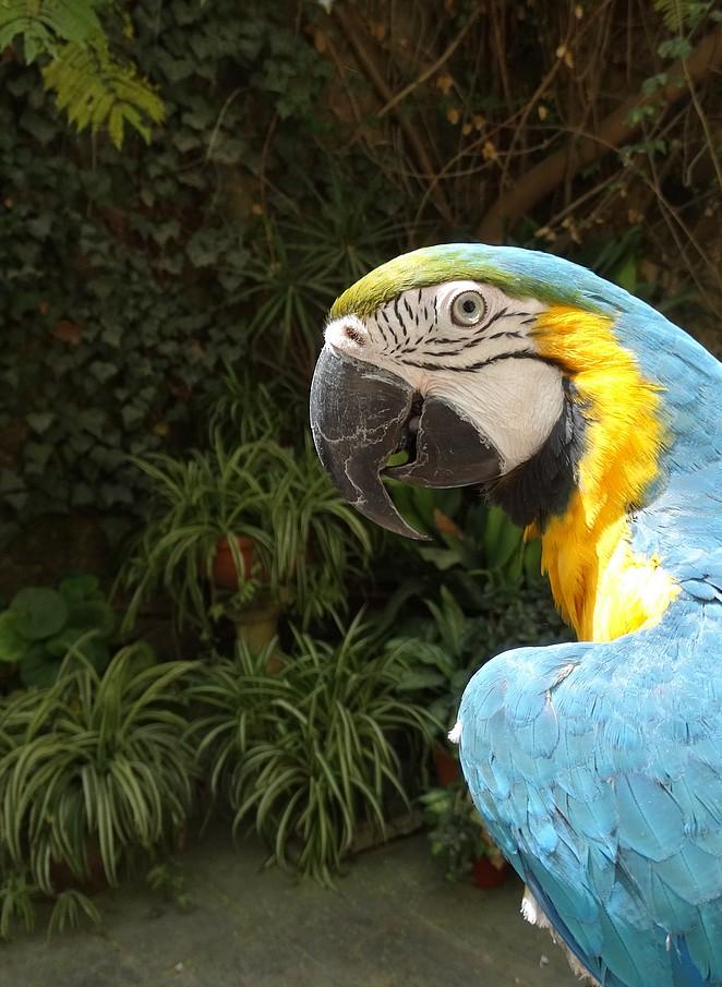 papegaai-casa-rocca-piccola