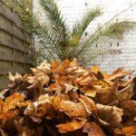 What do you prefer? Palmtrees or autumn leaves? autumn winterhellip