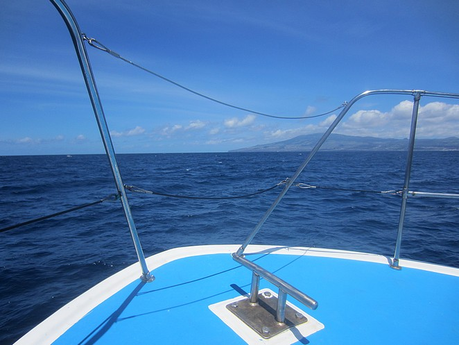 Walvissen-spotten-Azoren