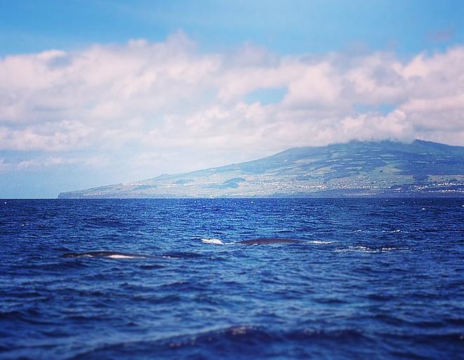 Walvistrip-Terceira