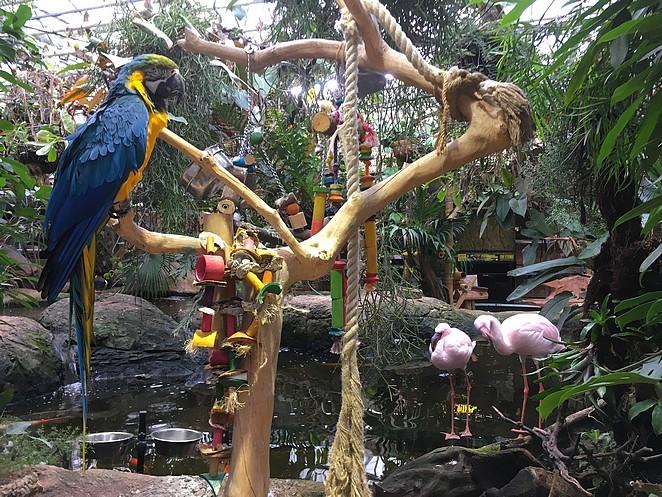 Avonturia-Vogelkelder