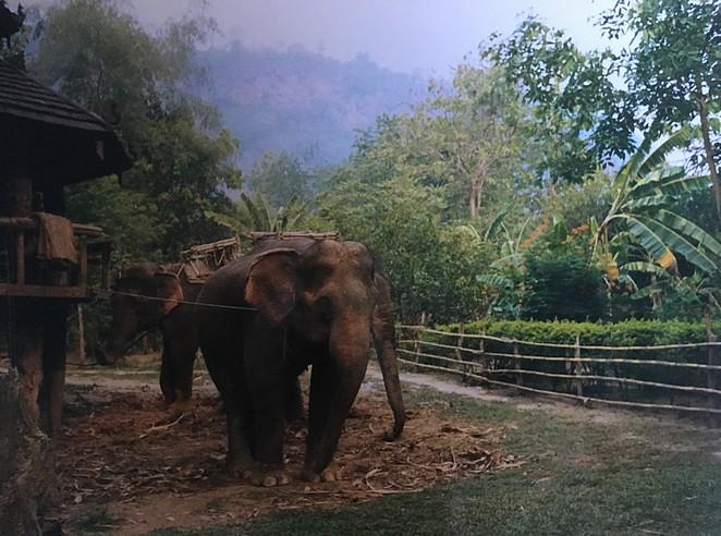 reizen van bangkok naar koh samui