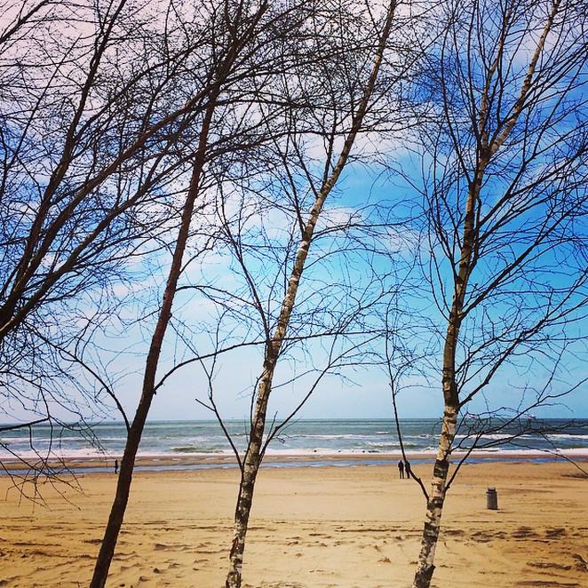 bomen-strand-scheveningen