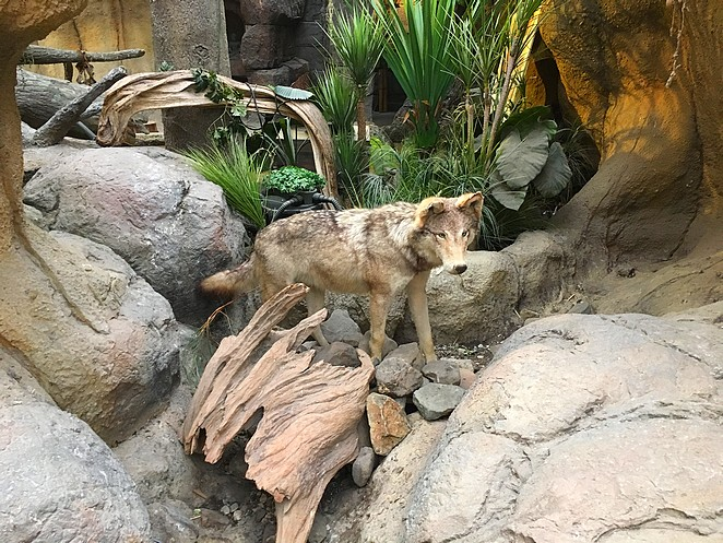 wolf-Avonturia