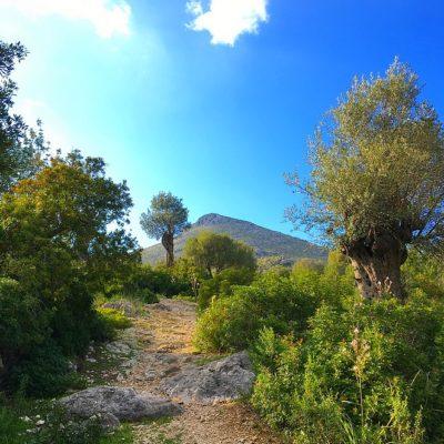 12x doen op Mallorca: actief en anders