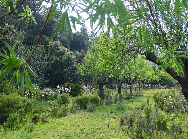 olijjfboomgaard-mallorca