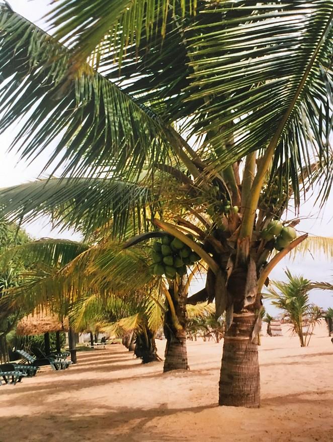 strand-negombo
