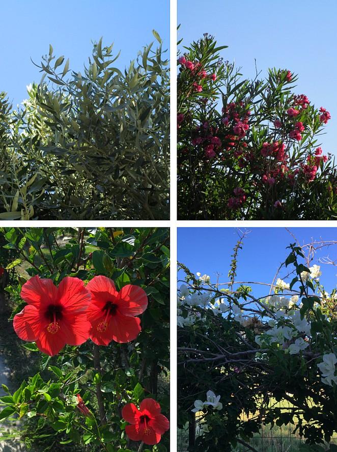 flora-vegetatie-kos