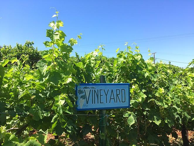 vineyard-kos