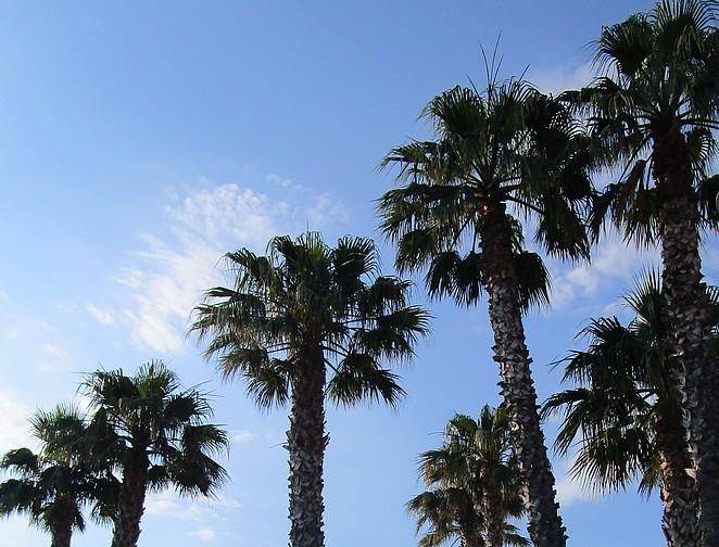 palmbomen-cote-d-azur