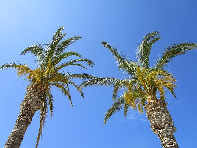 palmbomen-strand-sicilie