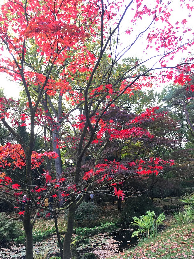de-japanse-tuin