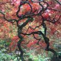 japanse-tuin-denhaag