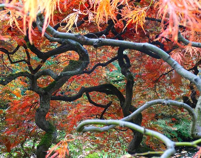 fotograferen-japanse-tuin