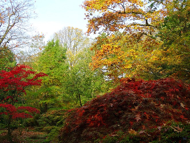 herfstkleuren-foto