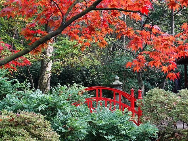 japanse-tuin-den-haag-blog