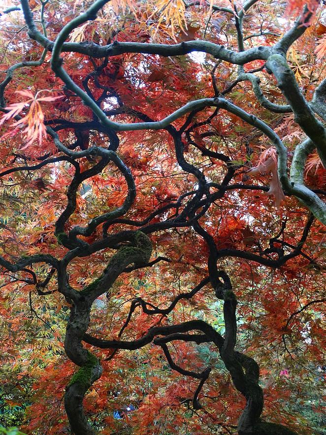 japanse-tuin-herfst