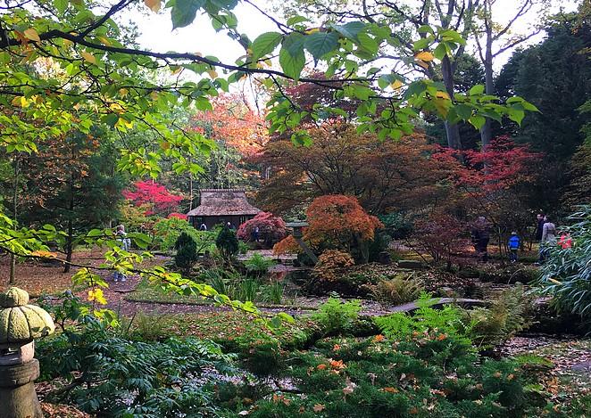 japanse-tuin-in-de-ochtend