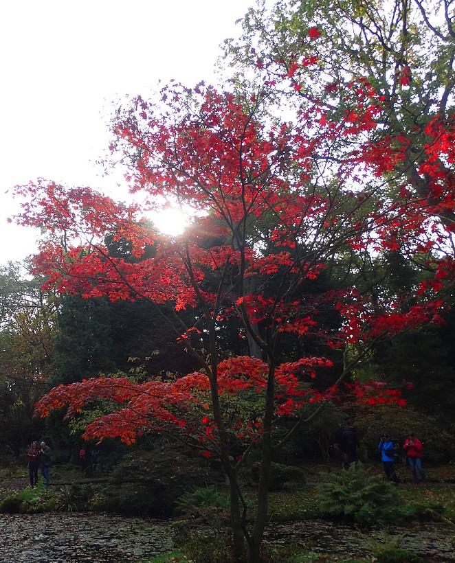 mooie-bomen-in-japanse-tuin