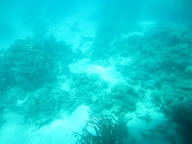 snorkelen-egypte