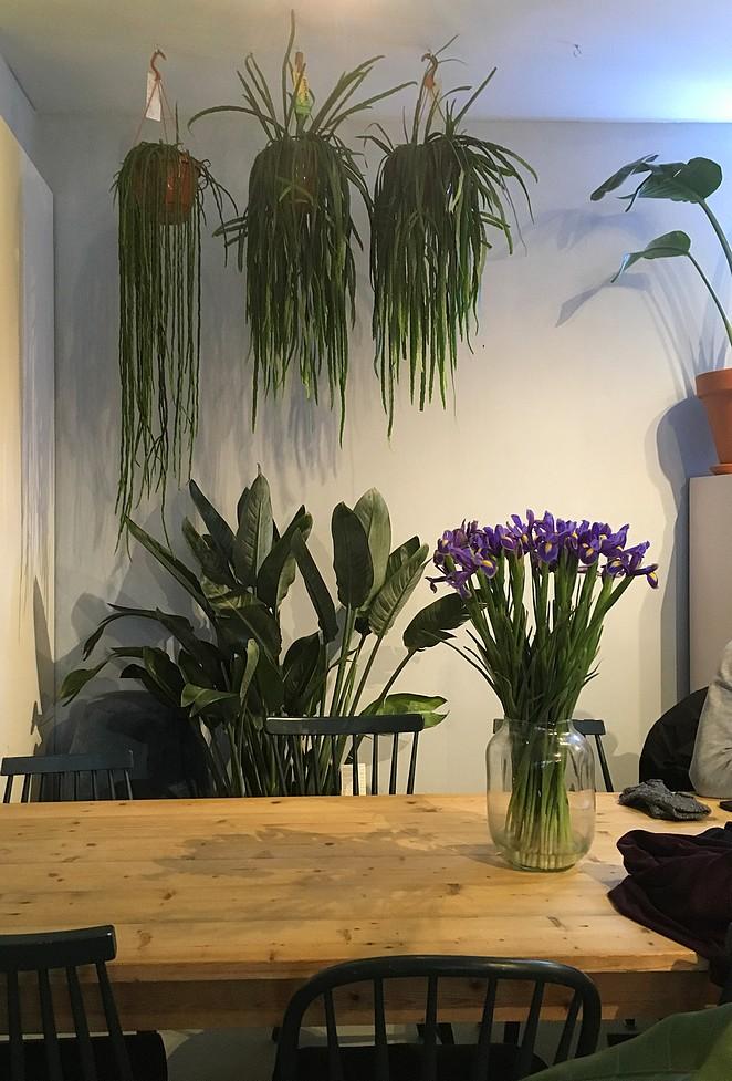 koffietent-met-planten-haarlem