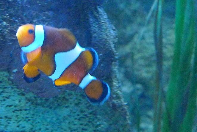 Nemo-sealife