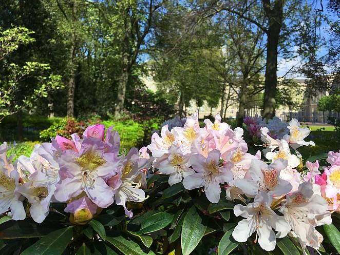 bloemen-paleistuin