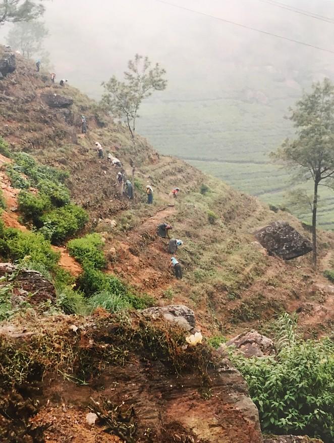 mooiste-plaatsen-srilanka-nuwara-eliya