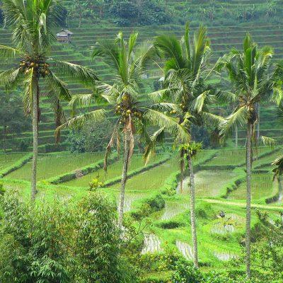 Top 5 hoogtepunten Bali: niet te missen highlights op Bali!