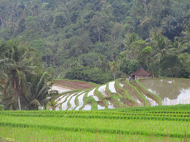 mooiste-rijstvelden-van-bali