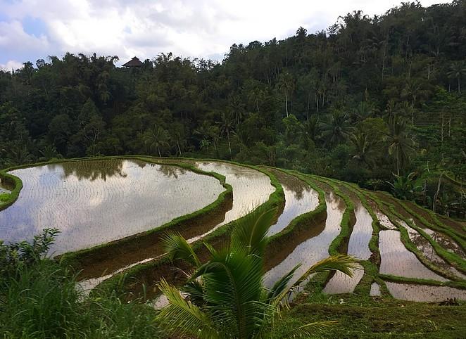 jatiluwih-mooiste-rijstvelden-bali