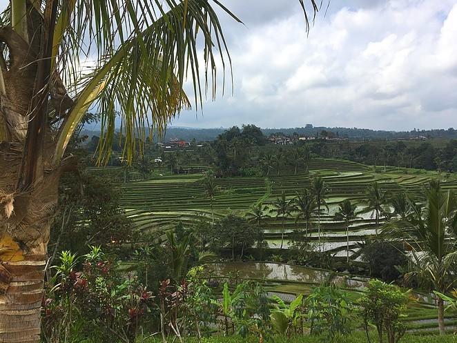 jatiluwih-mooiste-rijstvelden