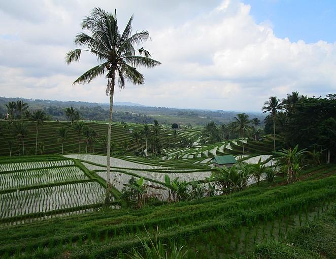 mooie-rijstvelden-bali