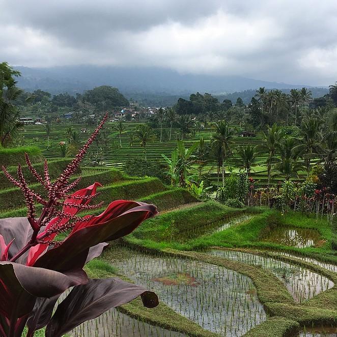 Mooiste rijstvelden Bali: Jatiluwih rijstvelden (tips!)