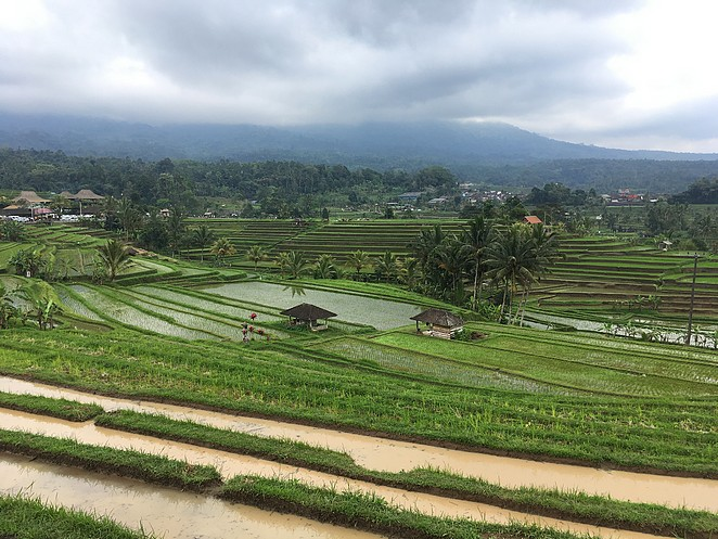 prachtige-rijstvelden-bali
