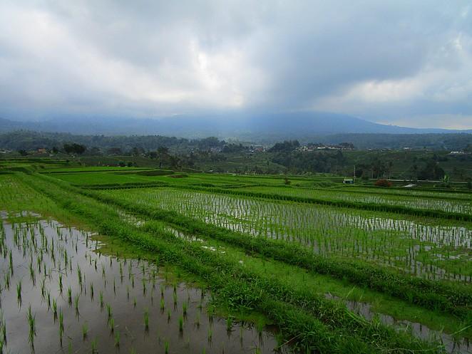 rijstterrassen-bali