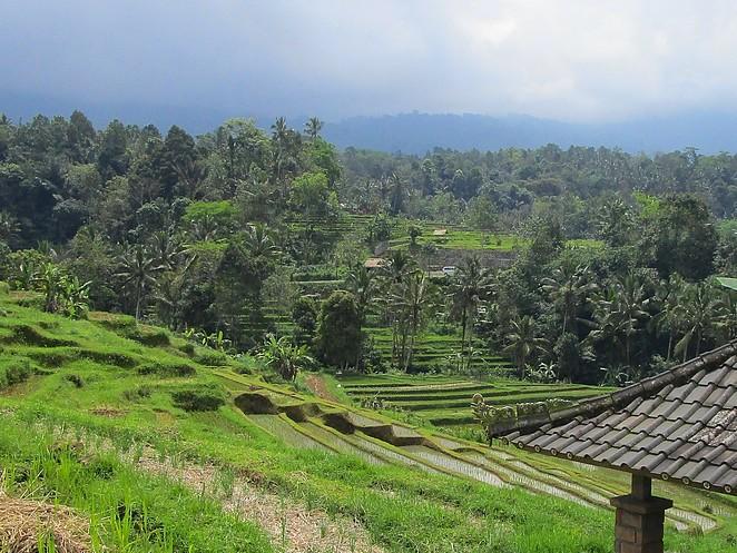 rijstvelden-bali-blog