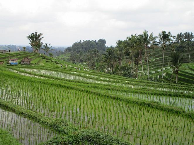 rijstvelden-jatiluwih