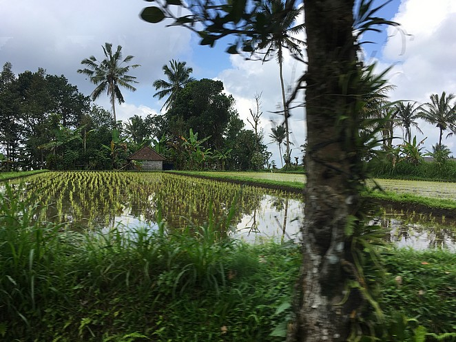 rijstvelden-op-bali