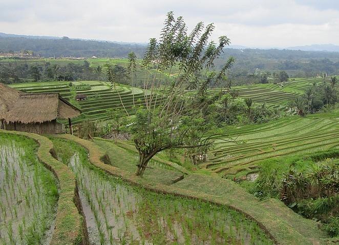 tabanan-rijstterrassen