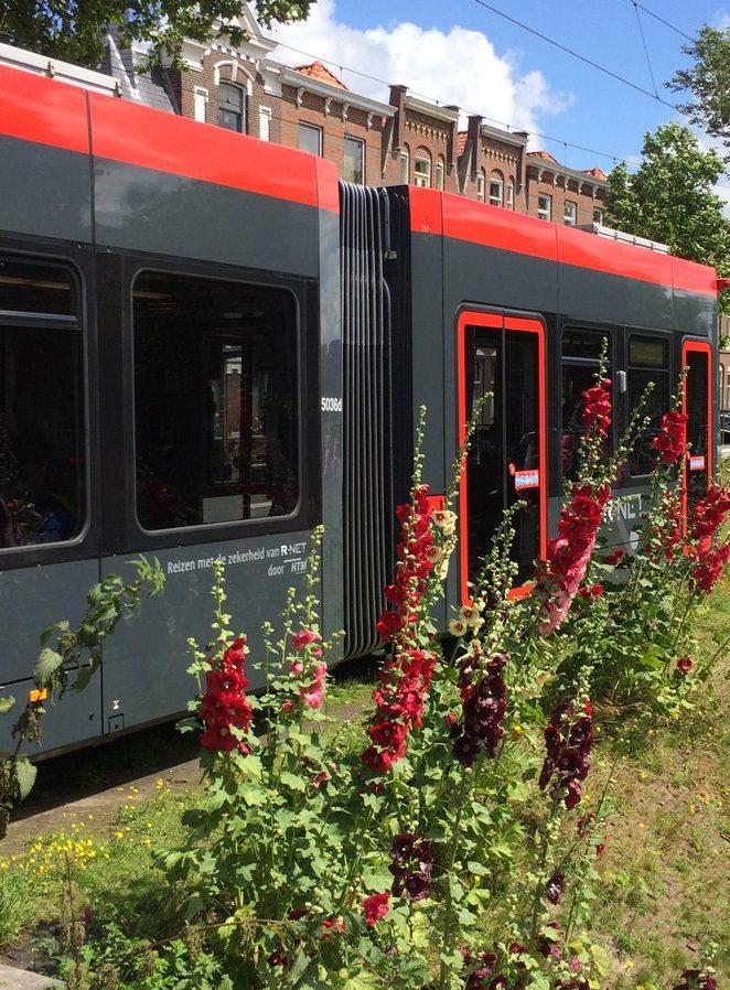 tram-11-den-haag