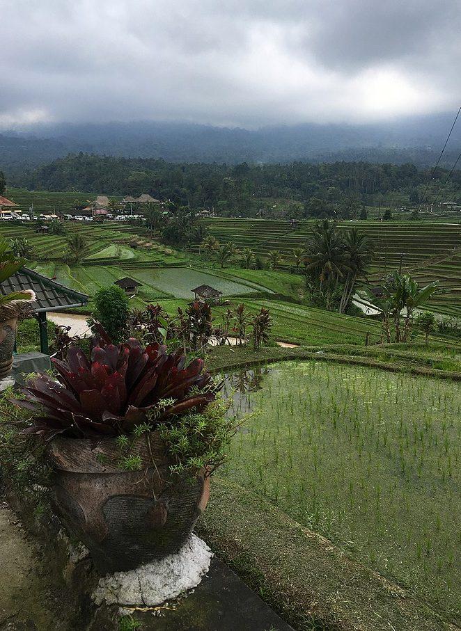 uitzicht-rijstvelden