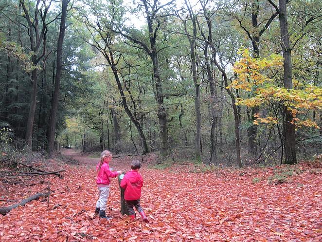 De kinderen in het bos
