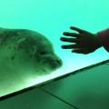 zeehondjes-kijken
