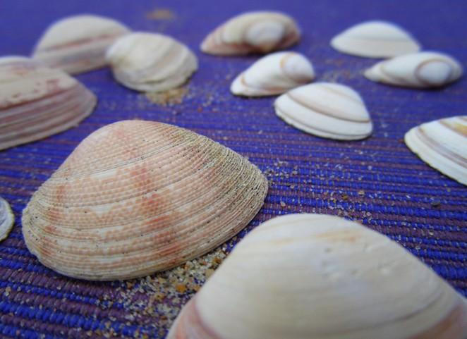 schelpjes-strand